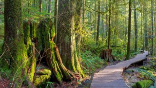 Lynn Canyon Park Vancouver BC Canada