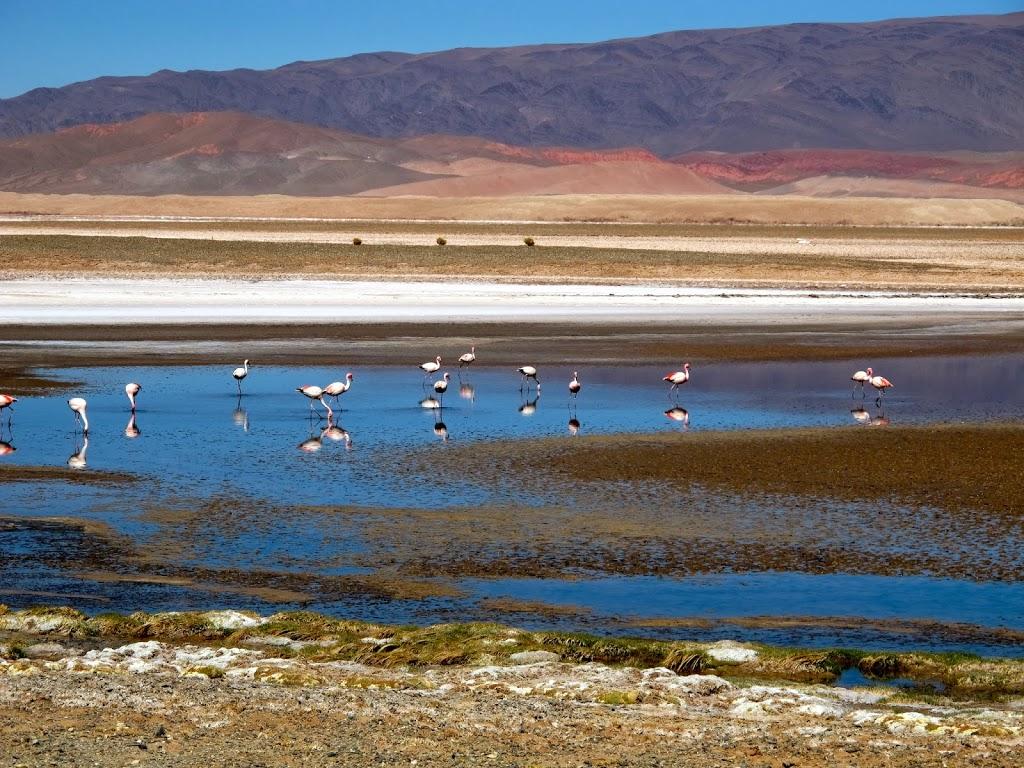 Lagunes et flamants roses sur la route de Cafayate – Argentine