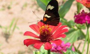 Faune et flore en Amazonie – Pérou