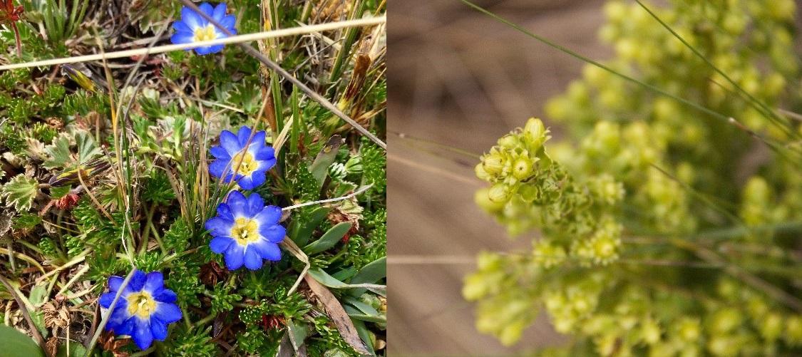 Flore de la réserve Antisana