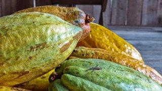 Fruits de cacao – Costa Rica
