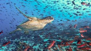 Iles Galapagos, du Jurassique au monde des volcans