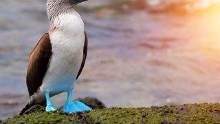 Iles Galapagos : mode d'emploi, animaux et infos pratiques