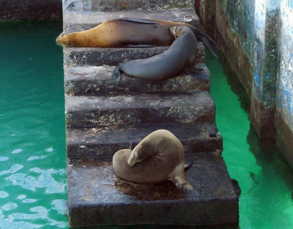 Lobos marinos, San Cristobal, Galapagos