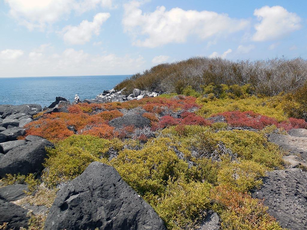 Punta Suarez, Española, Galapagos