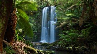 Great Otway Park – Great Ocean Road en Australie © Darryl