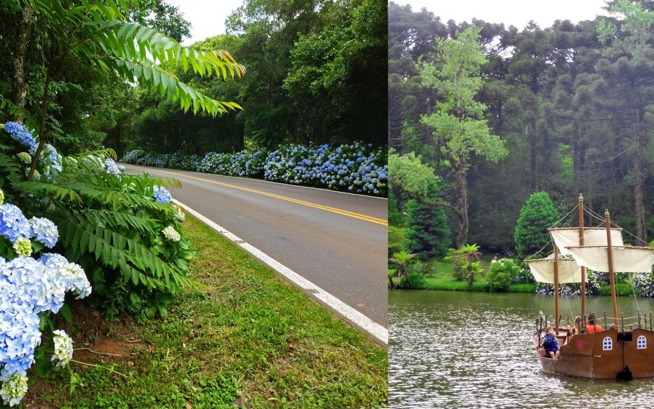 Hortensias en fleurs – Lago Negro (Gramado)