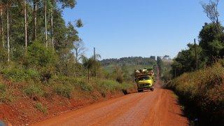 camion transportant la précieuse yerba mate sur les routes de terre rouge – Misiones, Argentine