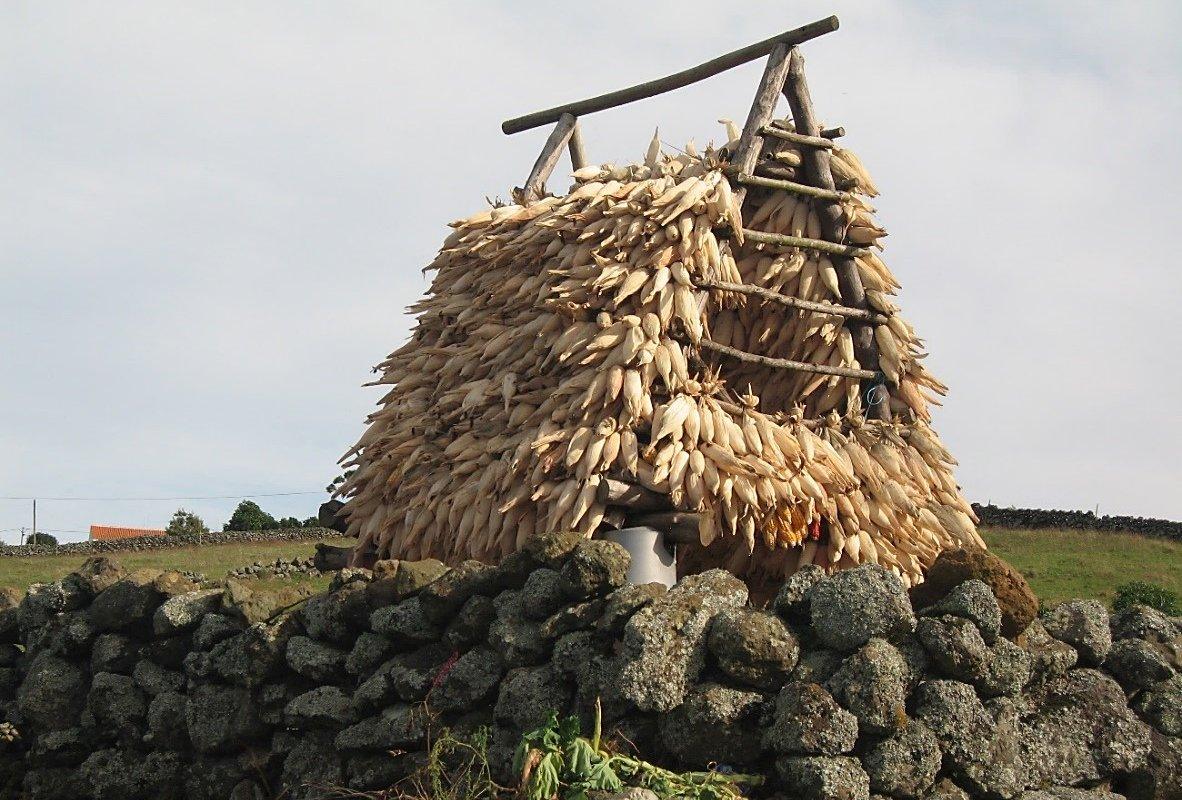Ilha de Graciosa : Séchoir à maïs – Açores
