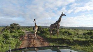 Aaah, les embouteillages en Afrique du Sud… Voyage sur la Route des Jardins