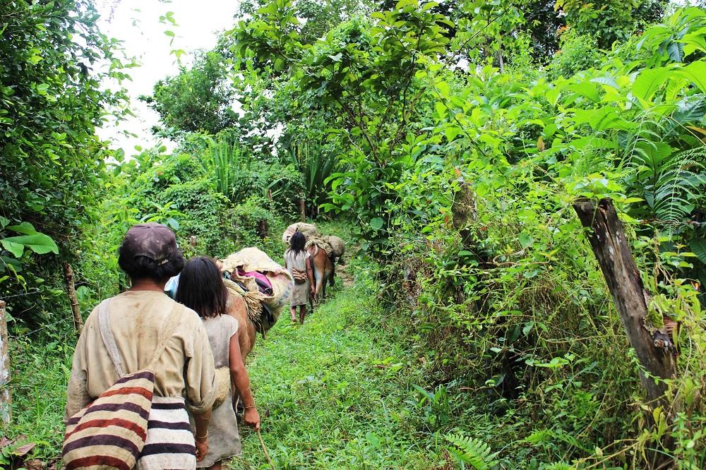 En pleine jungle de la Sierra Nevada accompagnés des Koguis – Colombie