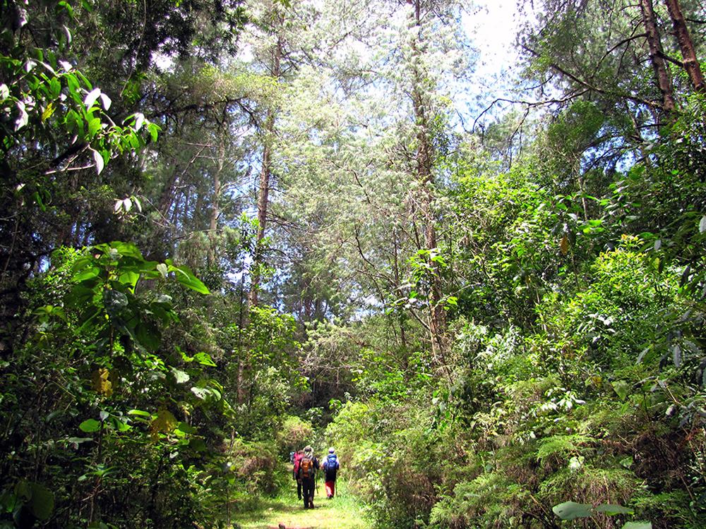 La Route de l'Or, sentier de la Serra da Bocaina