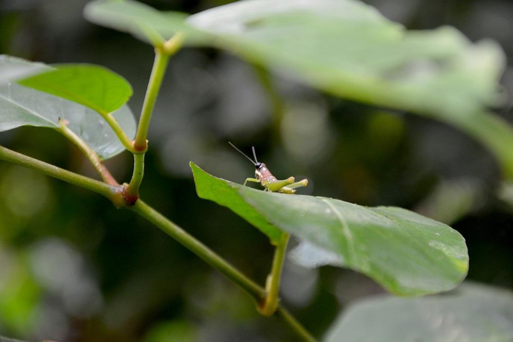 La selva et ses insectes – Amazonie bolivienne