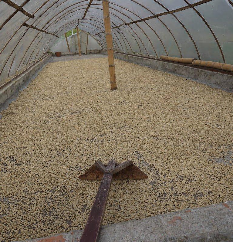 Le séchage des grains de café