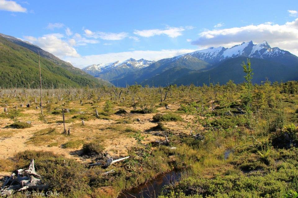 Sur la route de Tortel – Patagonie Chili