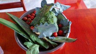 Légumes de la ferme bio d'Elisabeth qui serviront à préparer le dîner – Costa Rica