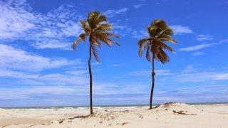 Les cocotiers Romeu et Julieta de Mangue Seco – Brésil