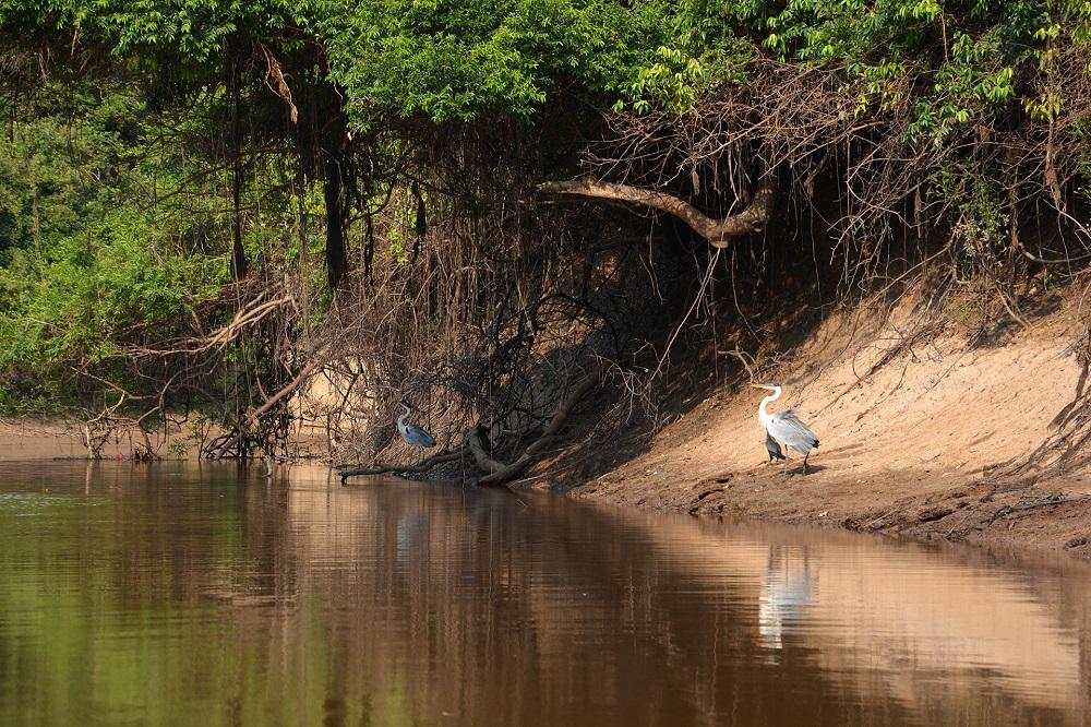 Les rives du rio Yacuma – Amazonie bolivienne