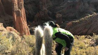 Mais qui se cache derrière ces cactus ??