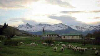 Moutons de l'estancia Nibepo Aike – El Calafate, Patagonie argentine