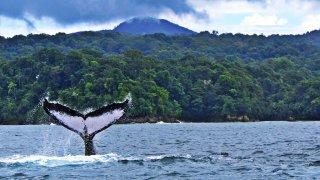 Observation des baleines – Choco, Colombie