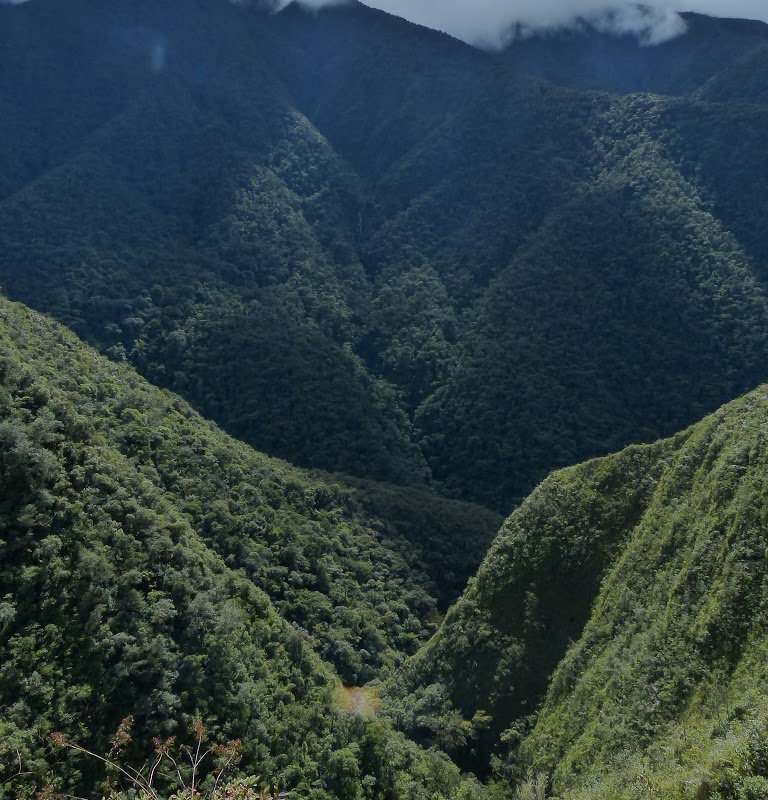Montagnes des Yungas – Bolivie