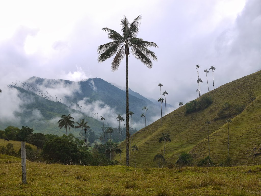 Les palmiers de cire – Vallée de Cocora, Colombie