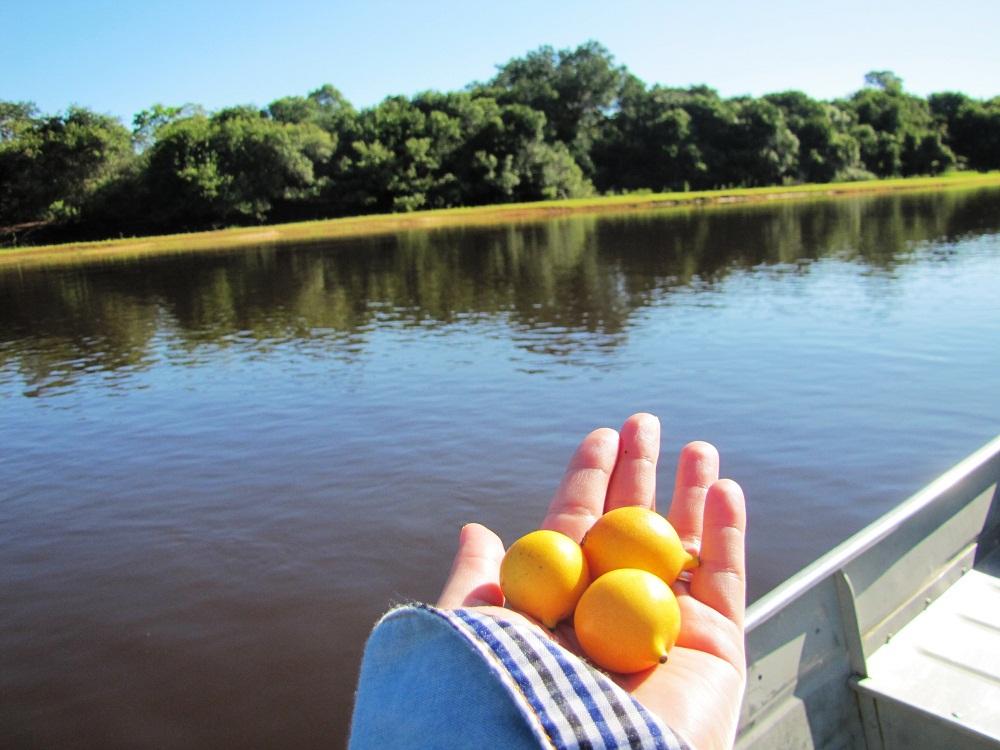 Navigation bateau à moteur – fruits azedinhas – Rio Negro, Pantanal