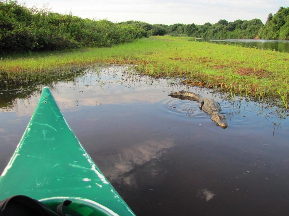 Safari canoë – Rio Negro, Pantanal