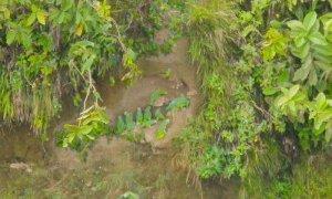 Perroquet – Amazonie Equateur