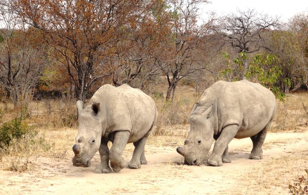 Zoé et Zaho sont au Limpopo