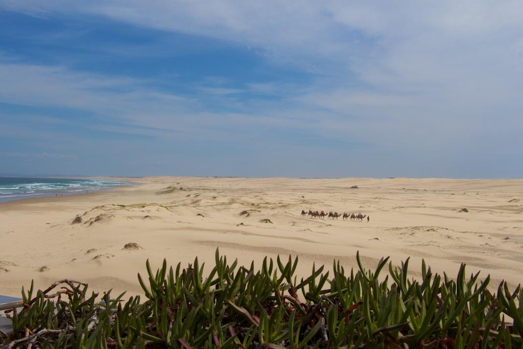 Dunes méharées – Port Stephens, Australie