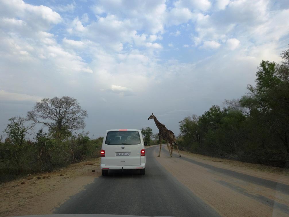 Le quotidien, dans le parc Kruger