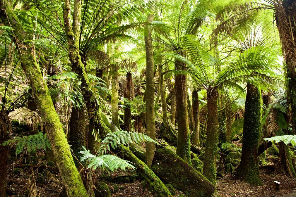 Mt Field National Park – Tasmanie, Australie
