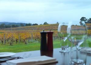 Vignes et vins – Yara Valley, Australie