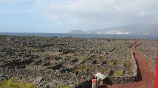 Pico : vignes de Criaçao Velha, au loin l'Ilha do Faial – Açores