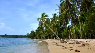 Playa Boca del Drago – archipel Bocas del Toro – Panama