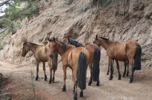 Randonnée à cheval sur l`île Robinson Crusoé au Chili