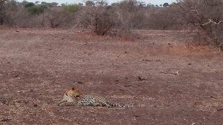 Réserve de Tuli au Botswana