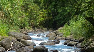 rivière à la sortie du village Bribri