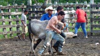 Rodeo à Oro – Costa Rica