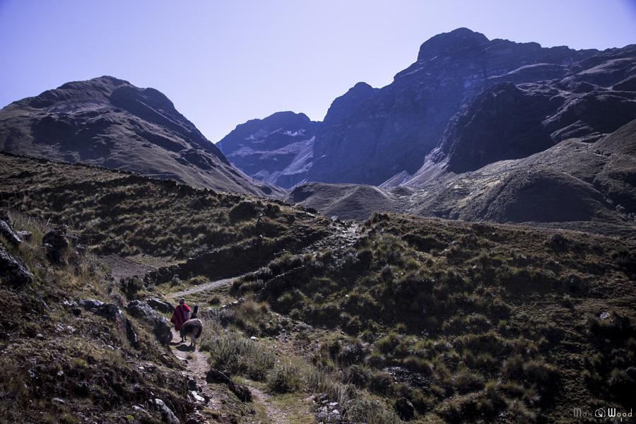 Chemin vers la maison d'Eugenio – Cordillère Apolobamba, Bolivie