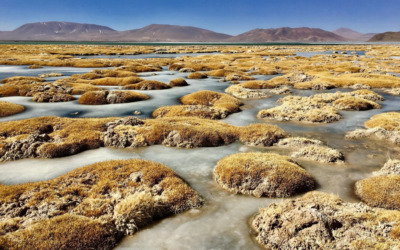 Salar d'Aguas Calientes – voyage au Chili