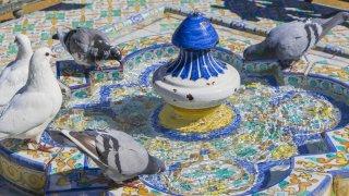 Séville – pigeons
