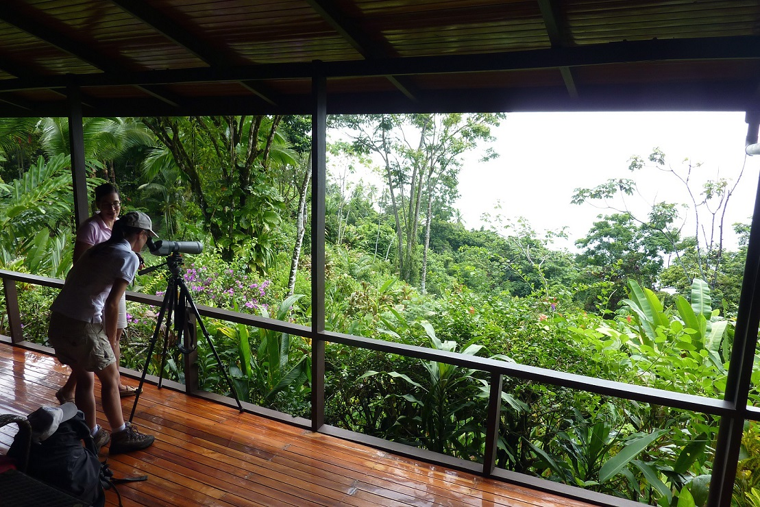 Spot d'observation au Paloma lodge – Costa Rica