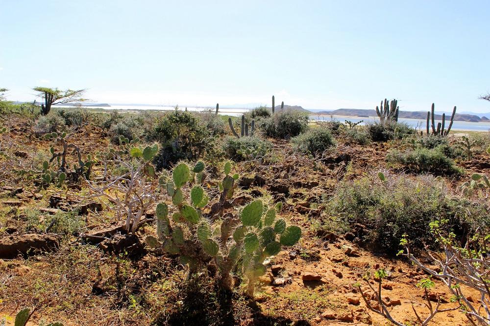 Un désert de cactus au bord de la mer – La Guajira, Colombie