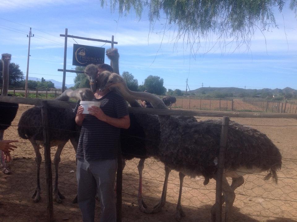 Laissez-vous tenter par un petit massage d'autruches à Oudtshoorn – Afrique du Sud