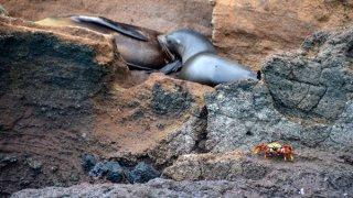 Voyage sur les îles Galapagos – Equateur